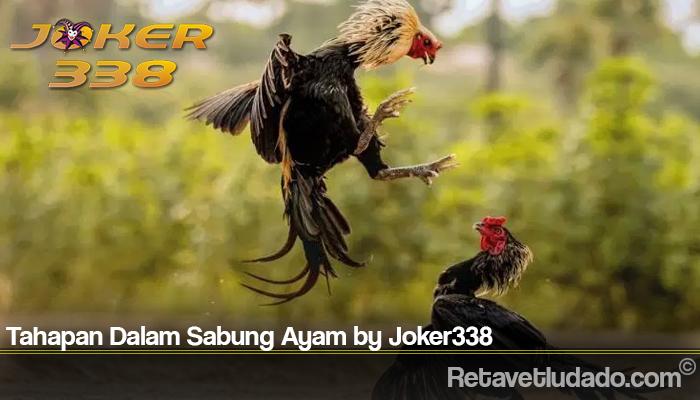 Tahapan Dalam Sabung Ayam by Joker338
