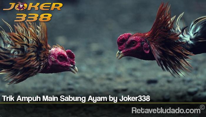 Trik Ampuh Main Sabung Ayam by Joker338