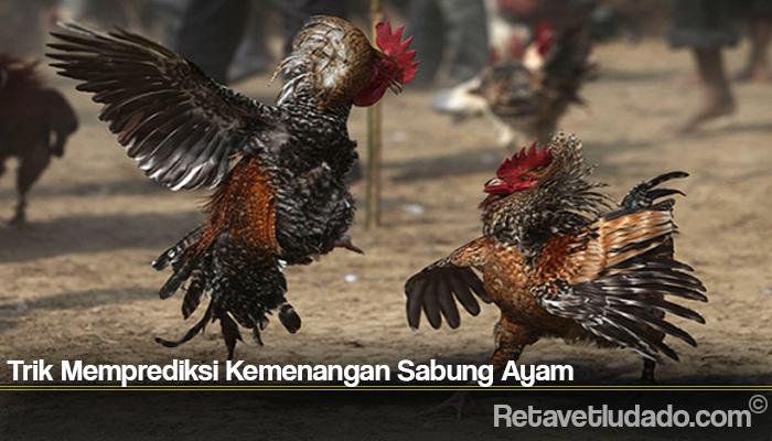 Trik Memprediksi Kemenangan Sabung Ayam