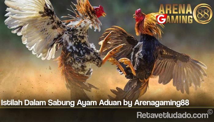 Istilah Dalam Sabung Ayam Aduan by Arenagaming88